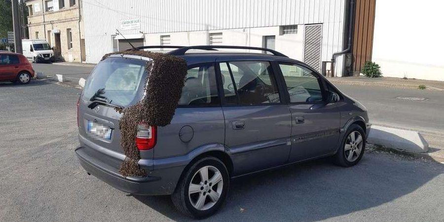 Essaim abeilles se gare sur une voiture