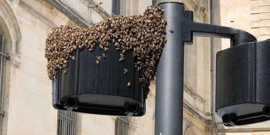 Un lampadaire accueille un essaim et ses abeilles