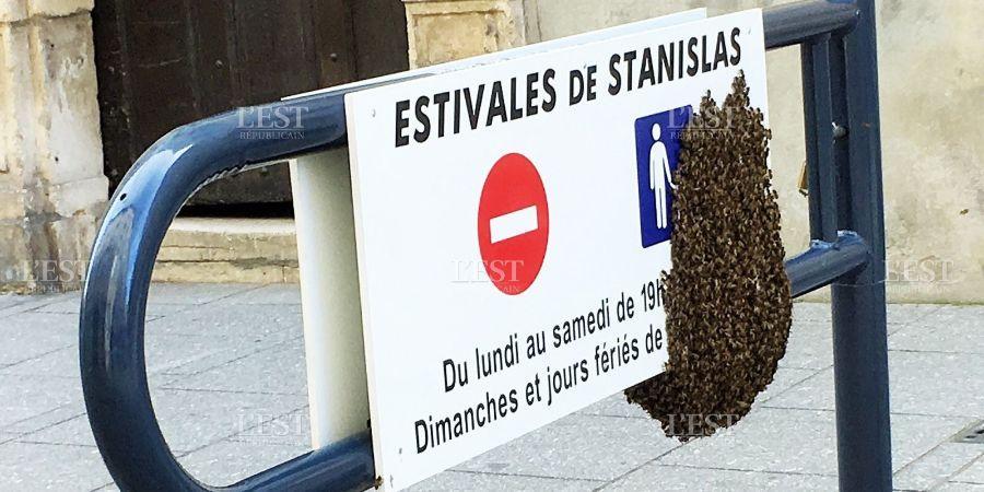 Des abeilles se posent sur une panneau de signalisation ne centre ville