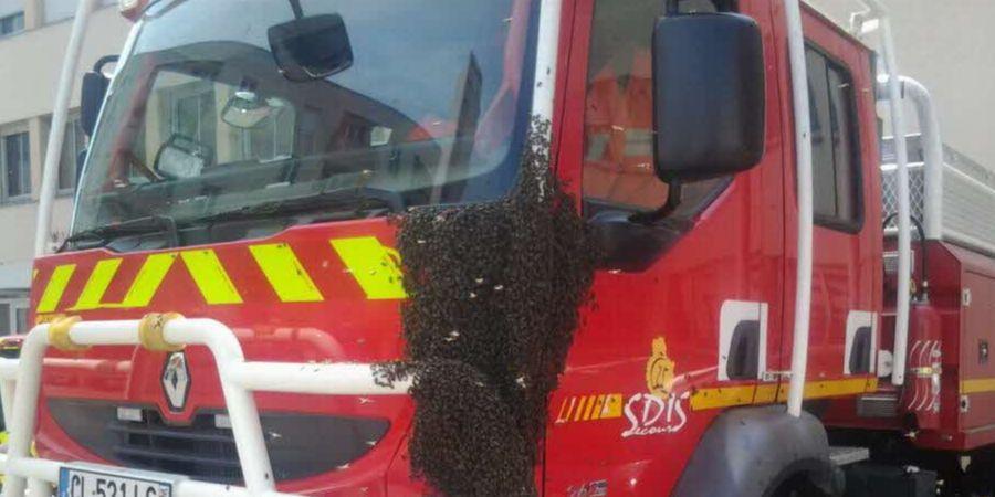 Un essaim à la caserne des pompiers