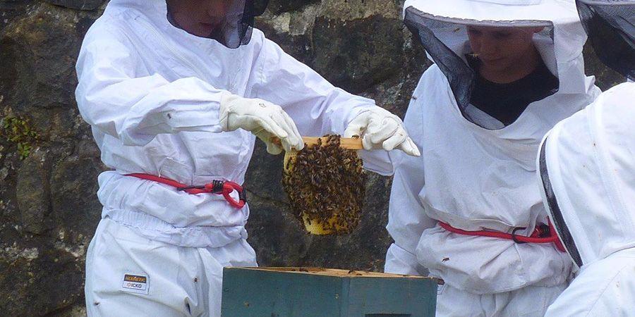 Mise en pot de la récolte de miel